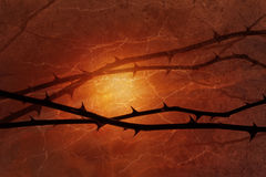 Dark rose thorns. In front of a warm light, gloomy rose lines are floating with a burned, natural gradient. The texture occur with scratches and chinks, taken Royalty Free Stock Photos