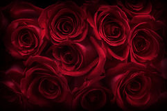 Dark Roses Stock Photo
