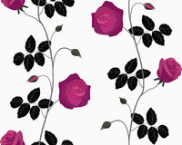 Dark roses seamless. Royalty Free Stock Photography