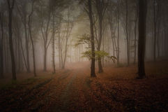 Dark scary colorful forest with fog in autumn Stock Images