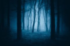 Dark scary forest with creepy trees Stock Image