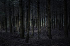 Dark and scary forest Stock Image