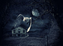 Dark and scary Haunted Mansion with owl Royalty Free Stock Photos