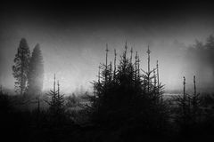 Dark and scary landscape. In black and white Stock Image