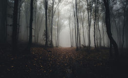 Dark scary mysterious forest with fog. Late autumn in a dark mysterious forest with fog Stock Image