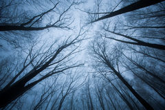 Dark scene with tree tops ending Royalty Free Stock Images