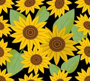 Dark seamless background with sunflower Stock Photography