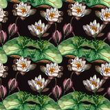 Dark seamless watercolor realistic botanical pattern with white marsh lilies royalty free illustration