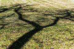 The dark shadow of a branched tree falling on a green meadow. At noon Royalty Free Stock Image