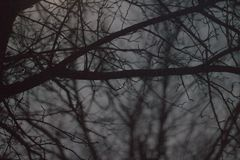 Dark Shot through Creepy Trees. Dark shot of creepy background with fall trees and well place depth of field royalty free stock image