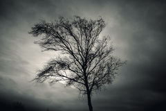 Dark silhouette of bare tree over dramatic sky Stock Image