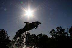 Dark silhouette of a bottlenose dolphin. royalty free stock photos