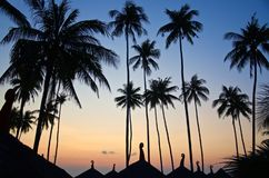 Dark silhouette of palm trees in sunset lights royalty free stock photo