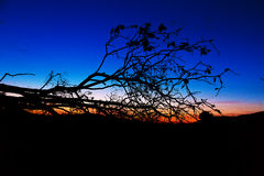 Dark silhouette of a tree contrasting with beautiful sky at sunset. Stock Photos