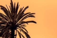 Dark silhouettes of date palms Stock Image