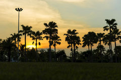 Dark silhouettes of palm trees with sky and sunset. Stock Photo