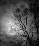 Dark skies. Clouds through a bare tree in the foreground in winter on the eastern shore of Maryland Royalty Free Stock Image