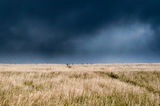 Dark skies. Over a hayfield Royalty Free Stock Photo