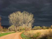 Dark Skies. Several sun lite deciduous trees stand on the sides of a rural gravel road with a very dark ominous sky as a backdrop. Location: Castle Valley, Utah stock photos