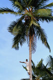 Dark-skinned African people waves his hand from top of palm. Zanzibar, Tanzania - February 18, 2008: One unknown young African man, approximate age 25-30 years Stock Images