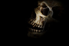 Dark Skull. Human skull with spider webs against a black background. Room for copy space stock images