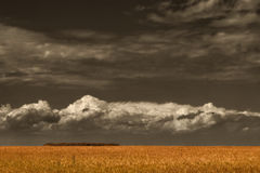 Dark sky above field Stock Photography