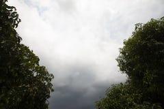 Dark sky on tree on day. The dark sky above the green tree before the rain falls royalty free stock photos