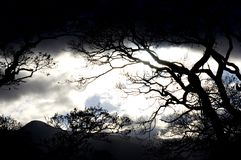 Dark sky and silhouetted forest. Silhouetted trees in forest with dark sky and mountains in background Royalty Free Stock Images