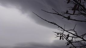 Timelapse storm with tree branches. Dark sky storm clouds timelapse with silhouette tree blowing in the wind stock footage