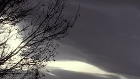 Timelapse storm with tree branches. Dark sky storm clouds timelapse with sun peeking through silhouette tree blowing in the wind stock video