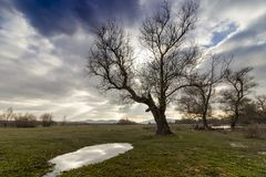 Dark sky with sunshine. Winter landscape with a puddle in the woods and trees stock photo