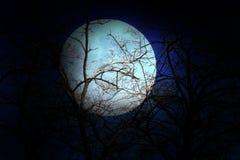 Dark sky and tree Stock Image