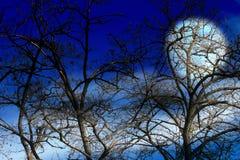 Dark sky and tree. Landscape with old dry tree and dark night sky stock photos