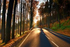 Dark sphalt road with the line across the colorful autumn forrest with the big beech trees Stock Image