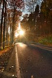 Dark sphalt road with the line across the colorful autumn forrest with the big beech trees Stock Photos