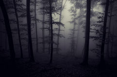 Dark spooky creepy forest with fog at night. Dark spooky eerie creepy forest with fog at night royalty free stock photo