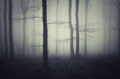 Dark spooky forest with blue fog Stock Images