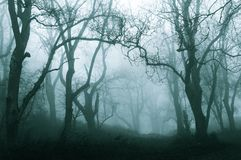A dark, spooky forest on a cold foggy winters day. With a muted, blue edit.  stock image