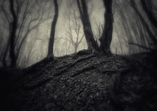 Dark spooky forest with fog on Halloween Royalty Free Stock Images
