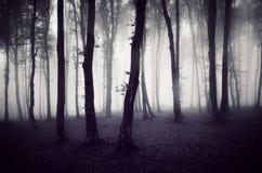 Dark spooky forest on Halloween. Dark mysterious spooky forest with fog on Halloween royalty free stock images
