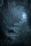 Dark spooky passage through. The forest, toned blue Royalty Free Stock Image