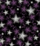 Dark Spring Background with Gray and Purple Flowers on Black. Abstract background wallpaper Stock Image