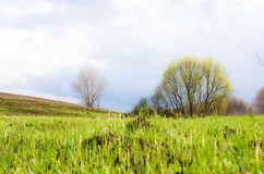 Dark spring field with lonely tree on it Royalty Free Stock Photography