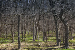 Dark spring forest with fresh grass Royalty Free Stock Photos