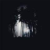 Dark spruce forest at night. Dark spruce forest in a black night Stock Photo