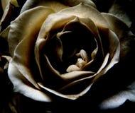 dark steg Royaltyfria Bilder