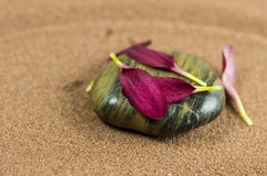 Dark stone with petals Royalty Free Stock Photography