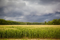Dark Storm Clouds over Corn Fields Stock Photography