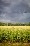 Dark Storm Clouds over Corn Fields Royalty Free Stock Photos
