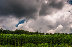 Dark storm clouds over a cornfield in Southern York County, PA. stock photo